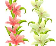Vertical seamless patterns with lilies Stock Photos