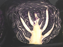 Vertical section of Red cabbage with white interior Stock Image