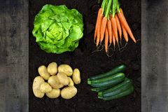 Vertical shoot of vegetables Stock Image