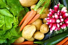 Vertical shoot of vegetables Royalty Free Stock Images