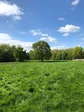 Grassy field and trees. Vertical shot of a grassy field with a dense tree line at the distant edge under a blue sky in the countryside in England royalty free stock images