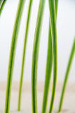 Vertical shot of green grass Royalty Free Stock Image