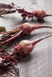 Vertical shot of organic beets. Freshly harvested organic beets vertical shot Stock Images
