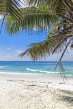 Tropical sandy beach with palm tree leaves royalty free stock photo