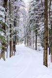Vertical Snowy Drive Way. Vertical image of a long driveway in the woods covered with snow Stock Photography