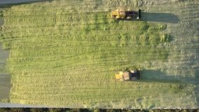 Vertical special bulldozers drive to-and-fro in silage pit. Vertical view powerful special bulldozers drive to-and-fro along pit tamping green corn silage on stock footage