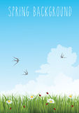 Vertical spring background. Vertical blue gradient sky and green grass spring background Royalty Free Stock Images