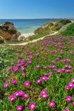 Vertical spring landscape beach Gale. Portugal . Royalty Free Stock Images