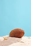 Vertical studio shot of a coconut in sand Royalty Free Stock Photography