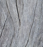 Vertical timber texture close up photo. Monochrome wood background. White old tree near the sea. Curves and lines on rustic timber. Rough timber texture Stock Images