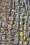 Vertical tree bark background Royalty Free Stock Images