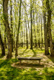 Vertical Tree Grove with Empty Bench Royalty Free Stock Photos
