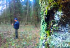 Vertical tree trunk in moss with man standing bokeh background. Orientation vivid vibrant color rich composition design concept element object shape backdrop royalty free stock photography