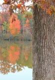 Vertical tree-water blur w/tree Stock Image