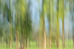 Vertical trees  Stock Photos