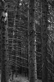 Vertical trees Royalty Free Stock Image
