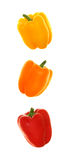 Vertical Trio of Bell Peppers. Yellow, Orange and Red bell peppers in a vertical row, Isolated on White royalty free stock images