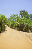 Vertical tropical red gravel drive road path Royalty Free Stock Photos