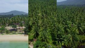Vertical Video for Social Media Applications on Mobile Devices. Aerial View of Coconut Palm Tree Plantation in Thailand. Shot with a DJI Mavic fps29,97 4k stock video
