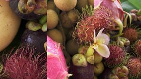 Vertical Video for Social Media Applications on Mobile Devices. Assortment of Exotic Tropical Thai Fruit Including. Rambutan, Dragonfruit, Longan, Mangosteen stock footage