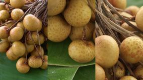 Vertical Video for Social Media Applications on Mobile Devices. Bunch of Fresh Raw Exotic Tropical Thai Fruit Dimocarpus. Longan Rotating on Banana Leaf shot stock video