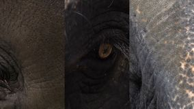 Vertical Video for Social Media Applications on Mobile Devices. Eye of Asian Elephant Elephas maximus. Close Up View. Shot with a Sony RX10 IV fps29,97 FHD stock video footage