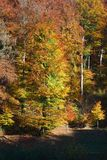 Vertical view of the beautiful autumn forest Stock Image