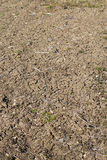 Vertical view of cracked soil in garden in countryside Royalty Free Stock Photo