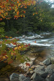 Vertical view of foliage and Swift River rapids, New Hampshire. Royalty Free Stock Photo