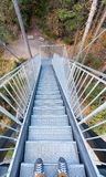 Sunset over the A vertical view of metal stairs leading into forest Gorge in the Rhine Valley of Switzerland on a late autumn day royalty free stock photos