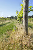 Vertical View of Small Vineyard Stock Photo