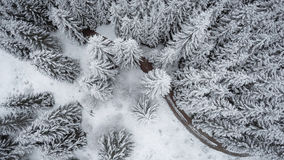 Vertical view of the snow covered spruces. Aerial photography Royalty Free Stock Photography