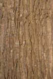 Vertical view of tree bark in the sun Stock Images