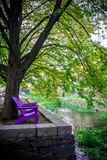 Vertical View of Violet Benches Near a Creek in Georgetown in Au royalty free stock image