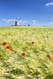 Vertical view of Windmill and wheat field Royalty Free Stock Images
