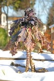 Vertical View of Winter Kale Stock Image