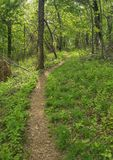 View of a Woodland Hiking Trail in the Mountains. Vertical view of a Woodland hiking trail located in the Blue Ridge Mountains of Virginia, USA royalty free stock photo