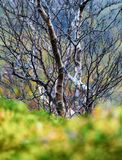 Vertical vivid Norway autumn tree green grass bokeh nature backg. Round backdrop medium format detail sharp resolution focus vibrant bright color composition royalty free stock photography