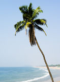 Vertical vivid palm south paradise Royalty Free Stock Image