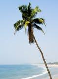Vertical vivid palm south paradise Royalty Free Stock Image