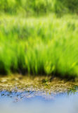 Vertical vivid summer blurred grass over the water Stock Images