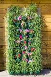 Vertical wall garden Royalty Free Stock Photo