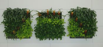 Vertical wall garden or wall arrangement Stock Images