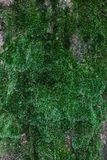 The vertical wall of green close-up moss.  stock photos
