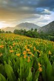 Vertical Wildflowers in the Wasatch Mountains, Utah, USA. Stock Photography