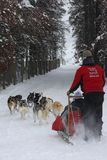 Vertical winter dogsledding image in Winter Park, Colorado. stock photography