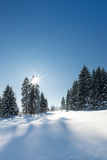 Vertical winter landscape Royalty Free Stock Image