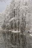 River with reflections of trees covered with snow. royalty free stock photos
