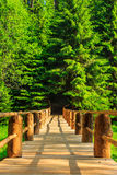 Vertical wooden bridge disappears in forest Royalty Free Stock Image