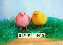 Vertical Yellow Easter Chick sitting in green Easter grass Stock Images